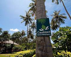 Sign coconut